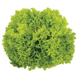 Green Coral Salanova กรีนคอรัลซาลาโนวา