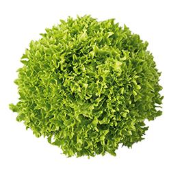 Incide Green Coral Salan กรีนคอรัลอินไซส์ซาลาโนวาova