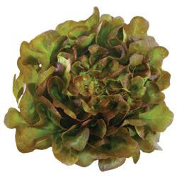 red oak salanova เรดโอ๊ก ซาลาโนวา