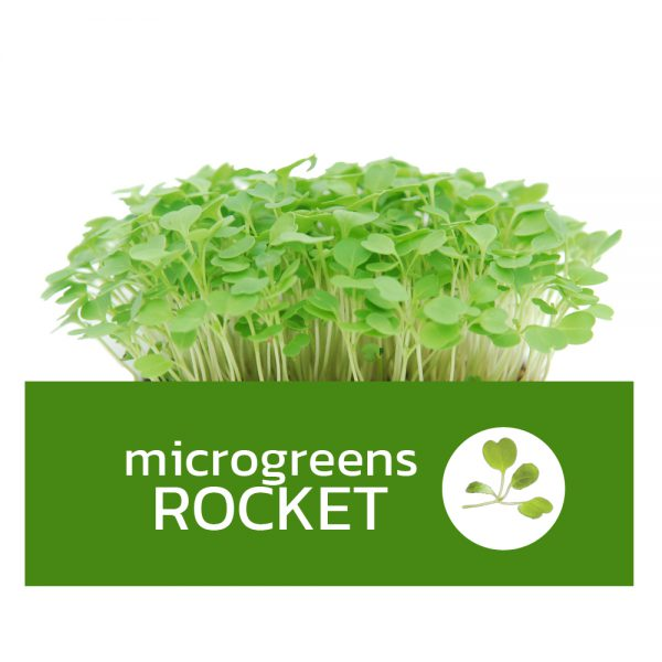 Microgreens Rocket ไมโครกรีนร็อกเก็ต