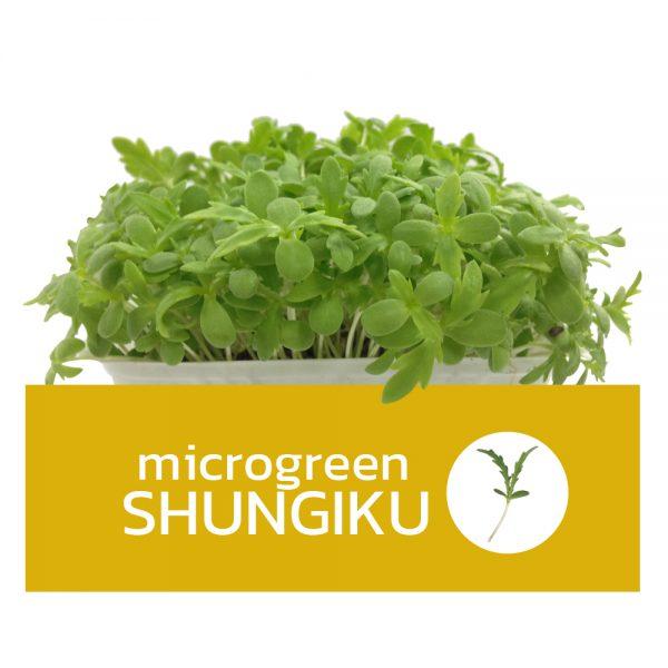 Microgreens Shungiku ไมโครกรีนชุนงิคุ